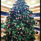 SC Tree