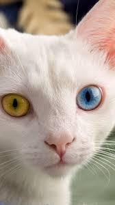 hetrochromia